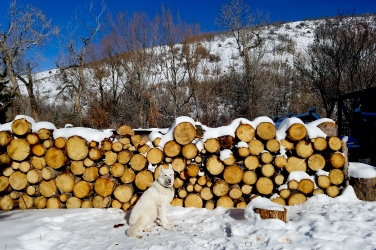 Heating our home has become a hobby. We swapped mountain bike rides for firewood fetching expeditions. We skip the gym and chop wood instead. Our dog Uinta enjoys the harvesting and processing components of heating our home with wood, but the fires themselves spook and overheat her if she sleeps too near.